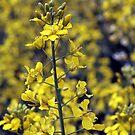 Yellow Sea #4 by hynek