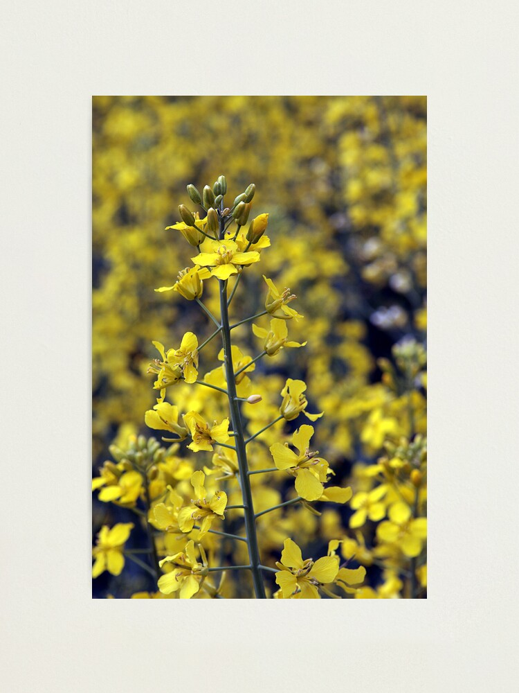 Alternate view of Yellow Sea #4 Photographic Print