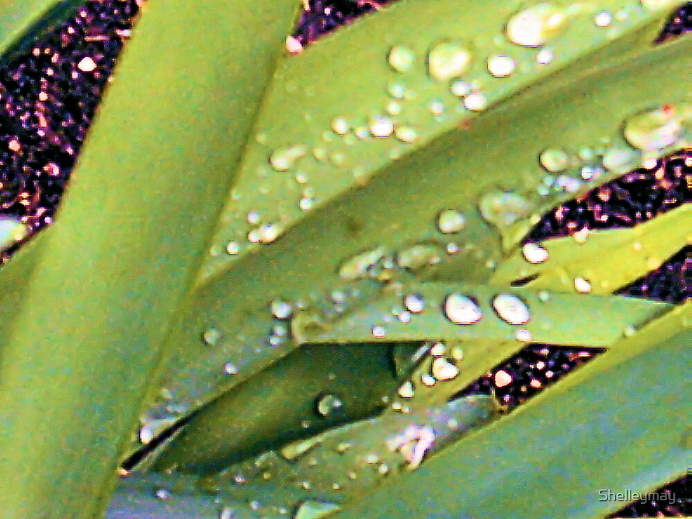 Water drops  by Shelleymay