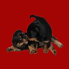 Rottweiler Puppies Playing Vector Isolated by taiche