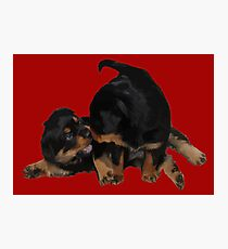 Rottweiler Puppies Playing Vector Isolated Photographic Print