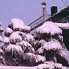 Domestic deep snow, Sapporo, Hokkaido, Japan. by johnrf