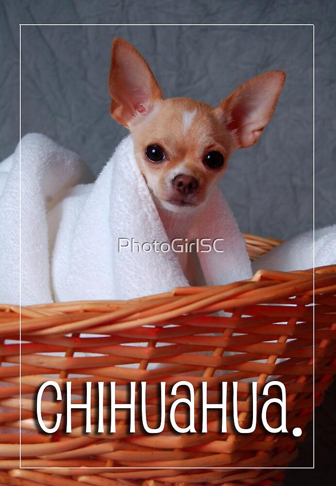 Chihuahua by Bjana Hoey