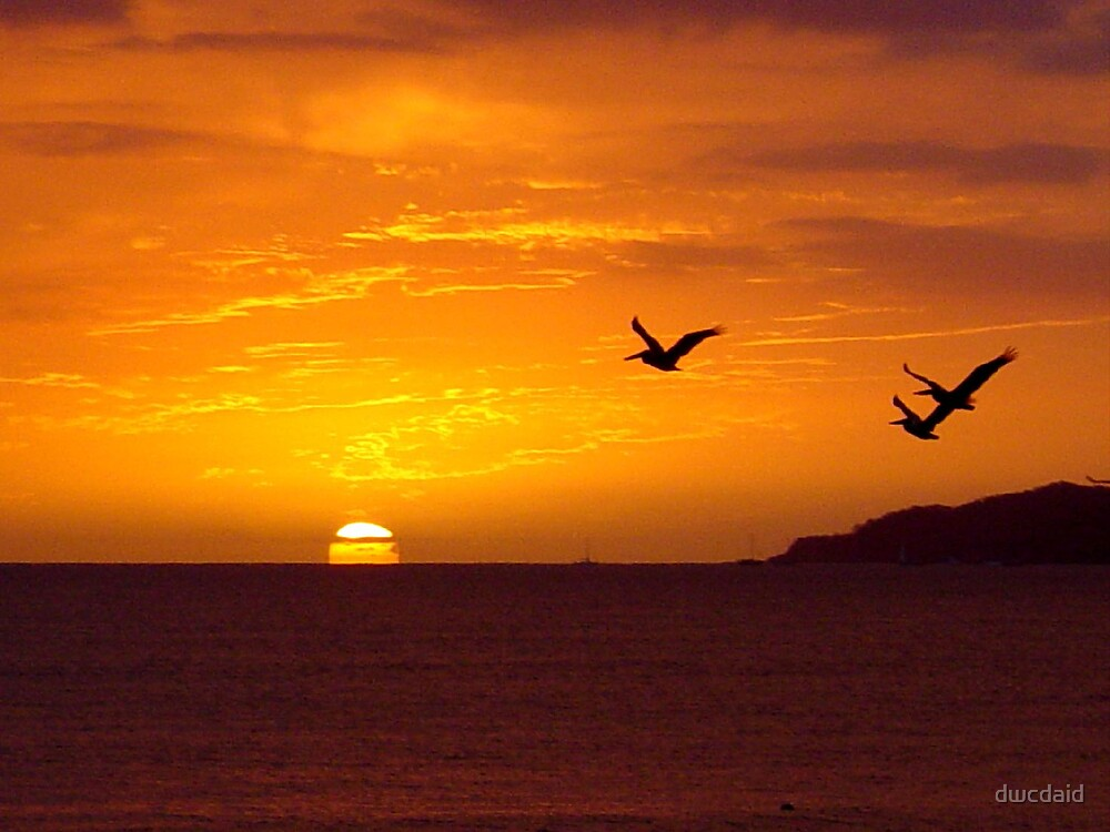 Pelican Sunset by dwcdaid