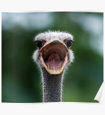 Angry Ostrich Poster