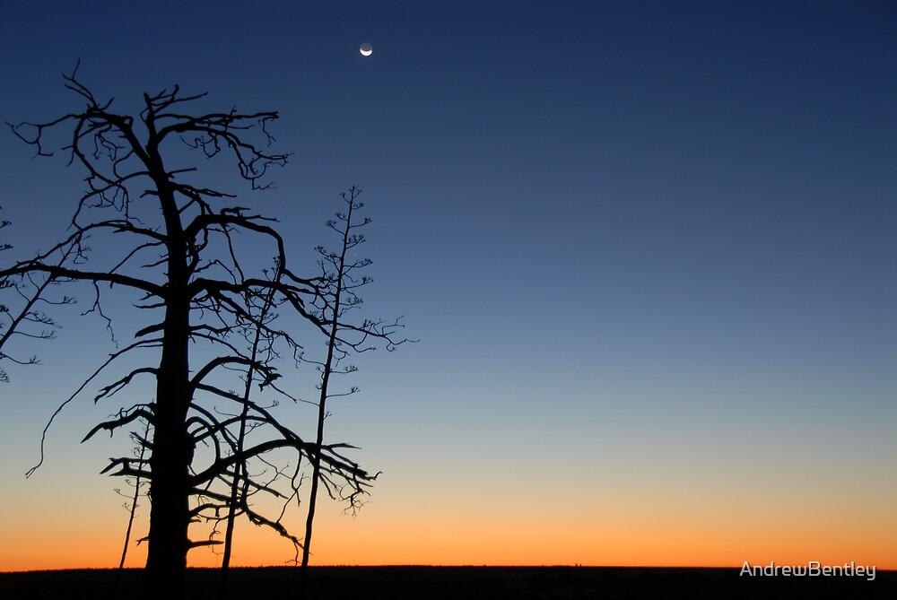 Ivanhoe tree moon 126 by AndrewBentley