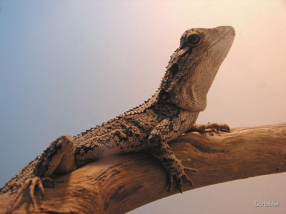 Jacky Dragon by Scribbler