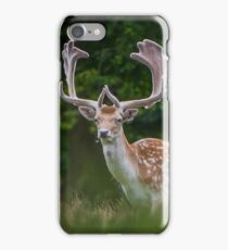Fallow Buck Deer iPhone Case/Skin