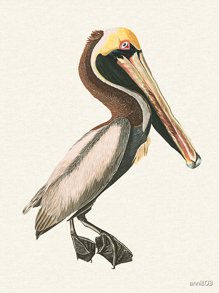 If anyone can , Pelican by anni103
