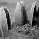Stonehenge by Shannan Edwards