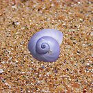 Shell Saturated by wondawe