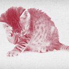 Kätzchen 01 von froileinjuno