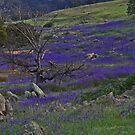 Wildblumen von Evita