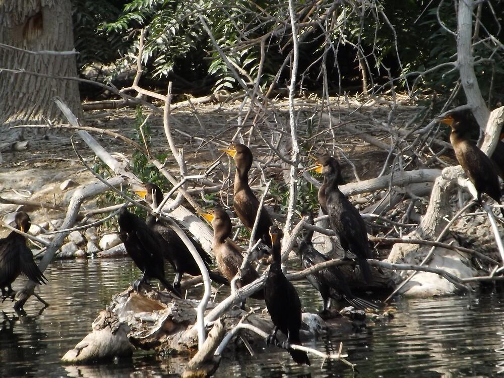 Birds on the Branches, City Park, Denver Colorado by lenspiro