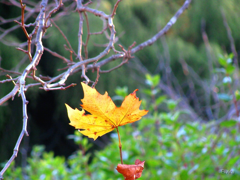 Season colours by Elvira