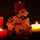 Rose Tree and Candle Light by Evita
