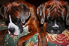 Sleeping Beauties -Boxer Dogs Series- by Evita