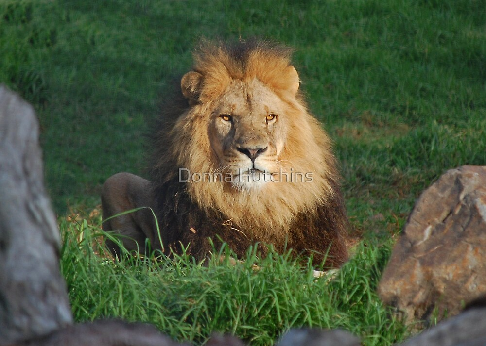 A most regal pose by Donna Hutchins