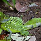 Green Basilisk Lizard by Julie Masters