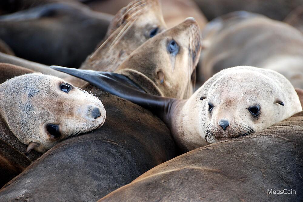 Port Phillip Bay seals by MegsCain