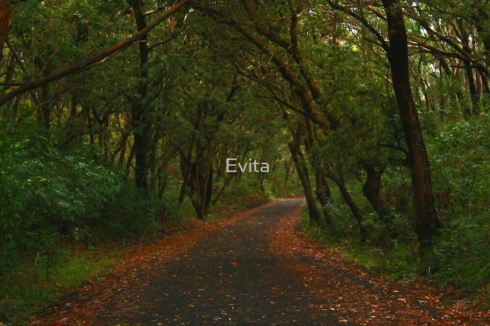 Winding Road by Evita