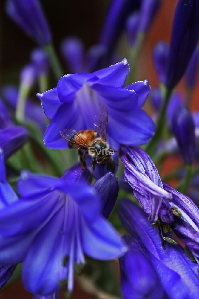 Busy Bee by Evita