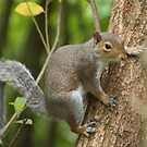 Squirrel on the hypotenuse  by JohnYoung