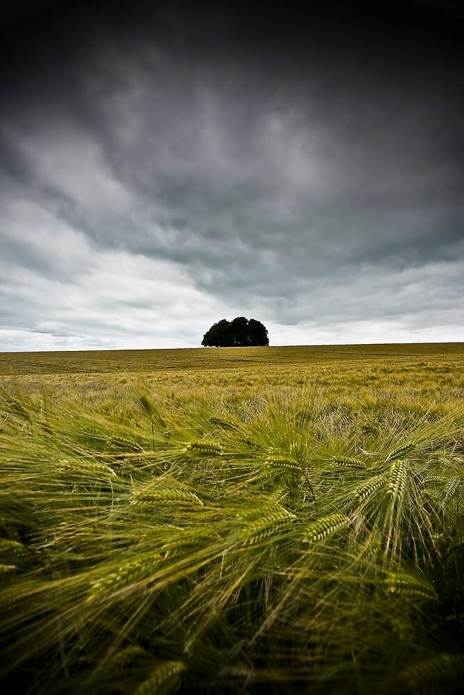 Sea of wheat by igotmeacanon