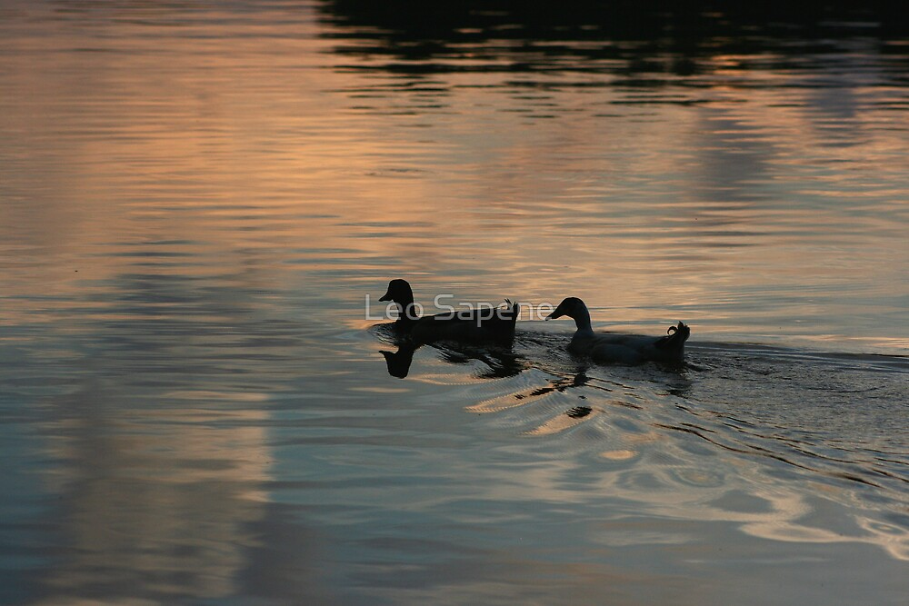 Two ducks in an afternoon pond. by Leo Sapene
