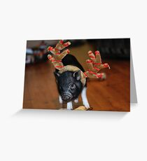 Pot Bellied Pig Greeting Card