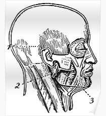Human Anatomy Drawing: Face (Side) Poster