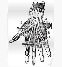 Human Anatomy Drawing: Hand Underneath Skin Poster