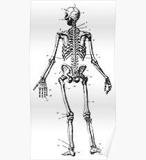 Human Anatomy Drawing: Female Skeleton Poster
