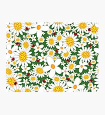 White Daisies and Red Ladybugs Photographic Print