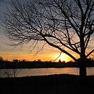 Tree IV by Joey Brunelle