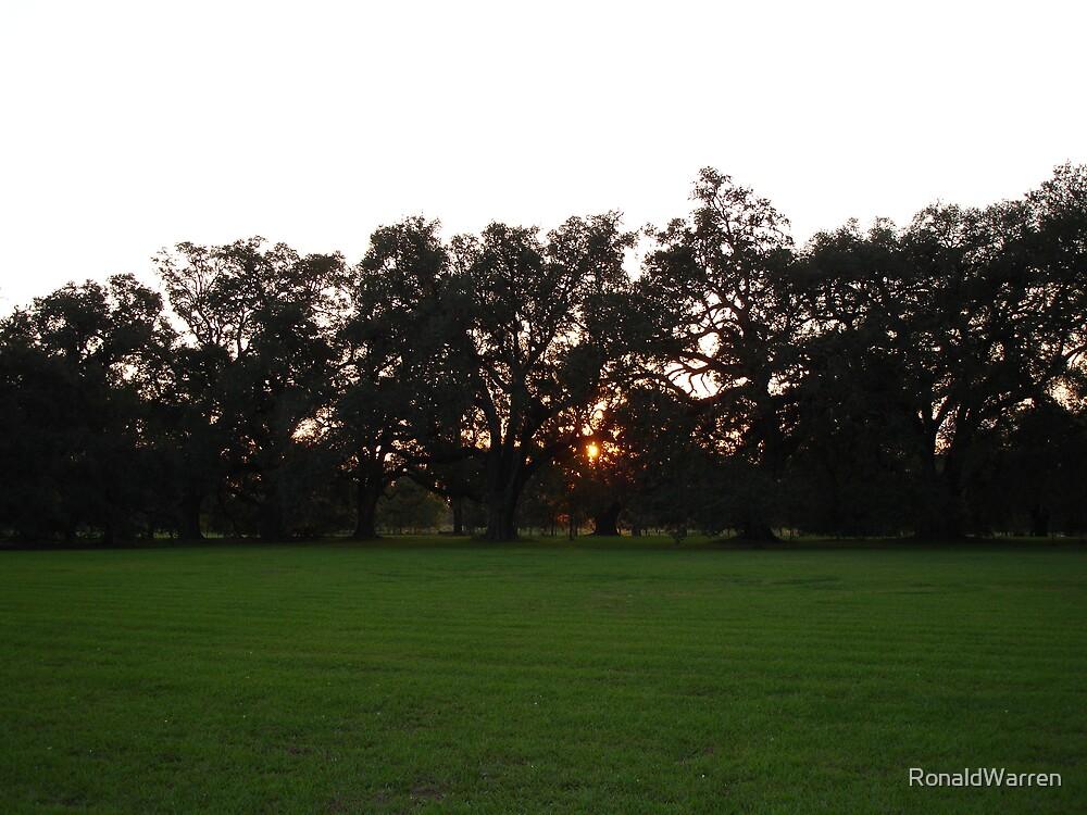 Sun Setting Amongst the Oaks by RonaldWarren
