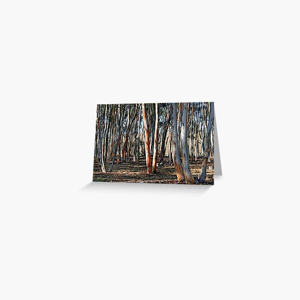 Sugar Gums - Kanmantoo Greeting Card