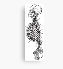 Human Anatomy Drawing: Upper Body Skeleton Canvas Print