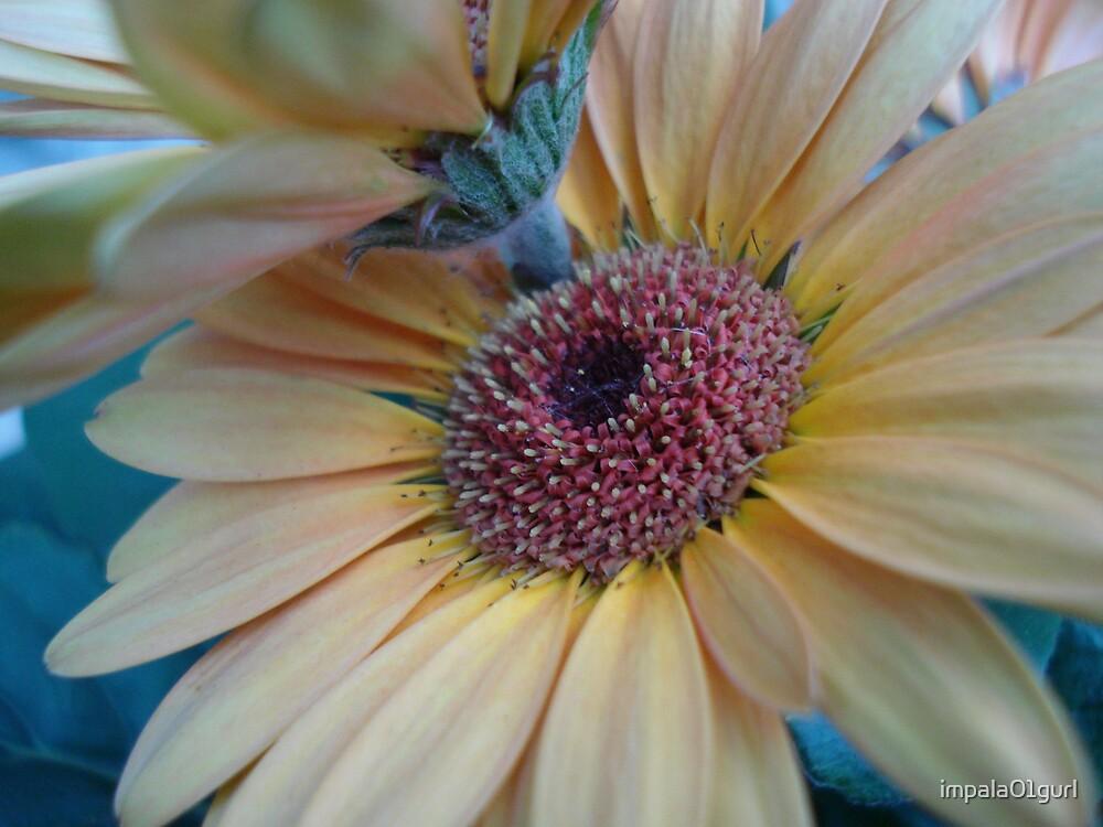 Yellowness by impala01gurl