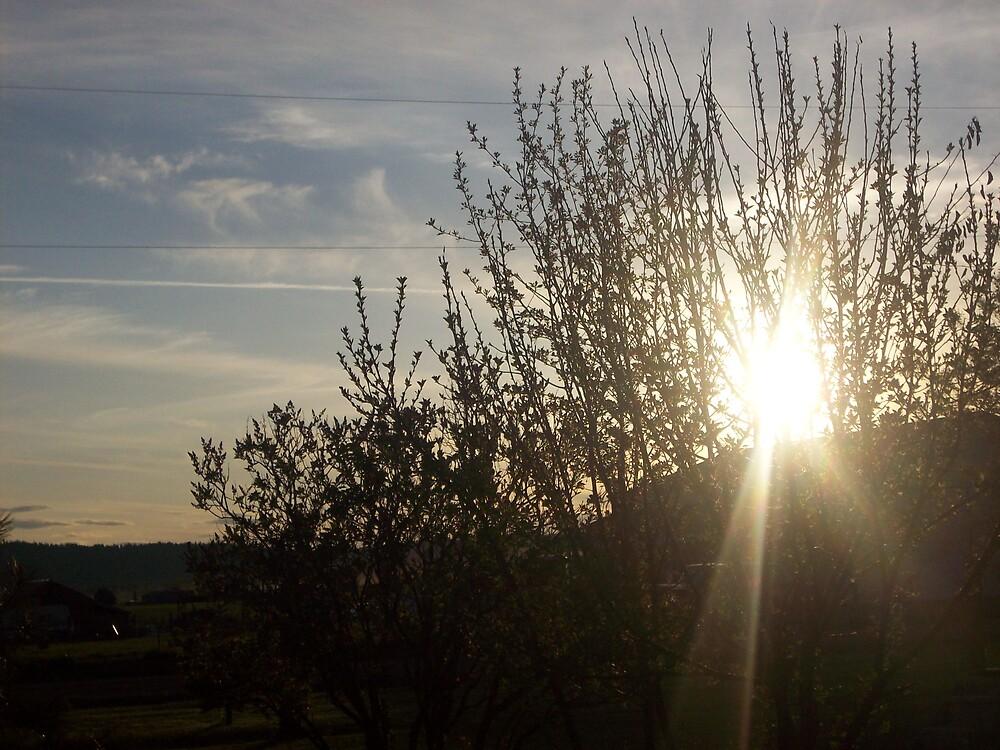 sun through the trees by Jessica Leavitt