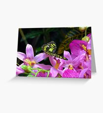 Yellow and black butterfly on purple flowers  Greeting Card