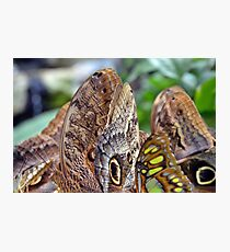 Many colorful butterflies wings Photographic Print