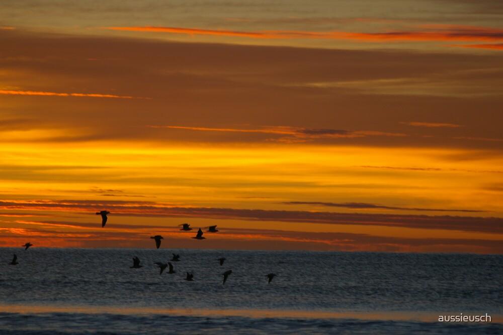 A golden sunrise by aussieusch