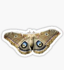 Moth Bug Insect Sticker