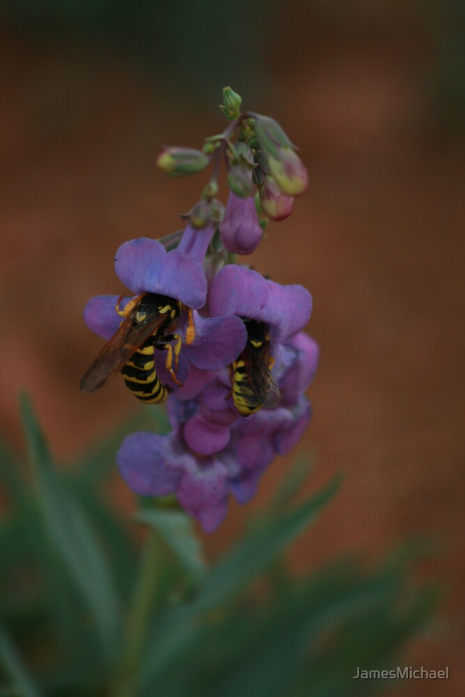Yellow Jackets by JamesMichael