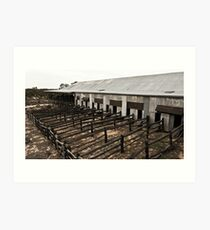 shearing shed Art Print