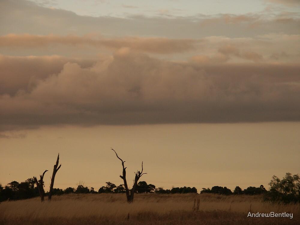 Dead tree storm 309  by AndrewBentley
