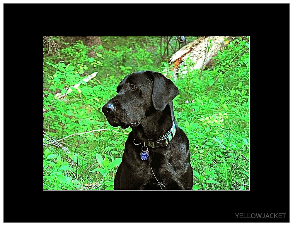 MOLLY IN MOLLY'S MEADOW by YELLOWJACKET