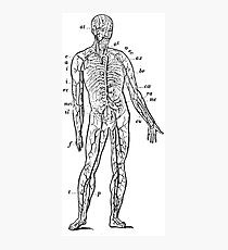Human Anatomy Drawing: Body Veins, Nerves, Nerve Endings Photographic Print