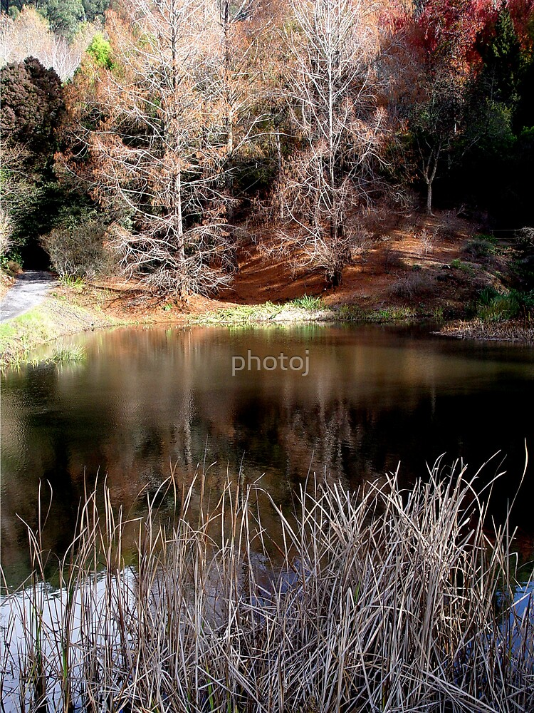photoj Landscape S.A. Mt Lofty by photoj